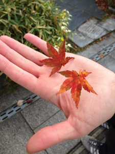 You can bring back to commemorate the autumn leaves that had fallen to the ground.