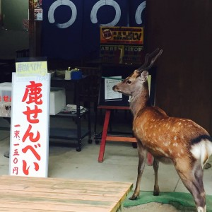 "He is waiting for your ""Shika Senbei(Deer cracker)""."