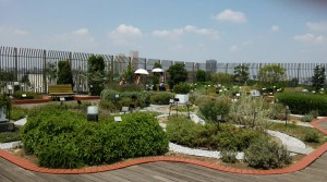 herb garden on the roof