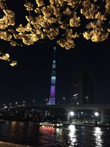 Asakusa's cherry blossoms and TOKYO SKYTREE at night.
