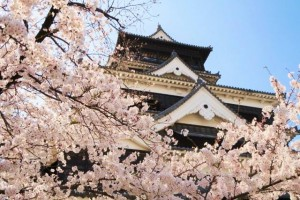 """Sakura"" attaches elegance conspicuously to ""Kumamoto"" Castle."