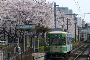 "[ Today's famous ""Sakura"" spot-3 : ""Toden Arakawa line"" & ""Arakawa shizen kouen"" @Tokyo ]"