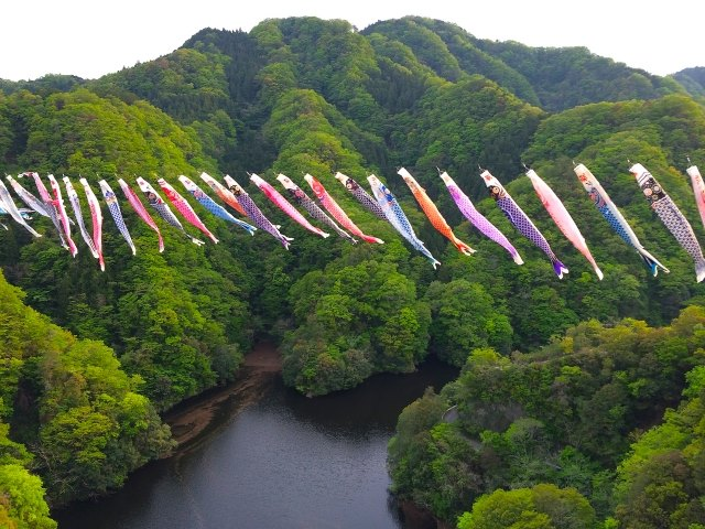"A lot of ""Koinobori"""