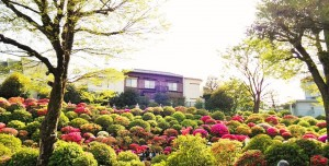 About 660㎡ of azalea garden