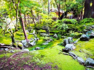 "The popular spot of the moss is ""Saihoji Temple"""