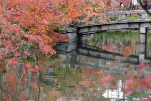 Autumn leaves reflected in the pond of the garden.