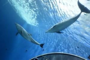 Dolphin Fantasy.
