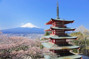 In cherry blossoms season, we look the cherry blossoms, a five story pagoda and Mt.Fuji!