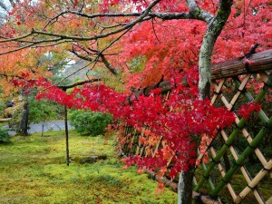"""Momiji-gari"" in autumn"