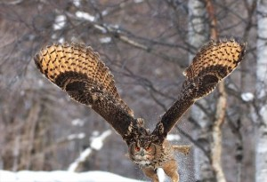 "If you are lucky, you can see Japanese owl ""Shima fukurou"" around the hotel."