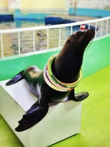 You can watch the show of the sea lion, too.