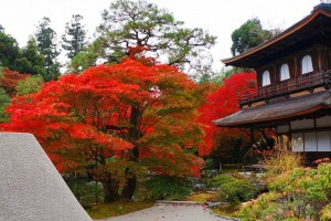 """Ginkaku-ji"" with colored leaves"