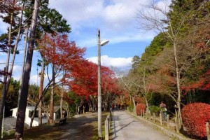 """Tetsugakuno-michi"" in autumn"