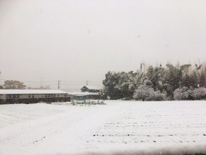 The photo is the snow in Saitama!