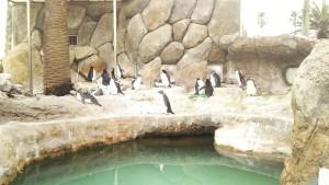 """PENGUIN-JIMA"" (Penguin Island)"