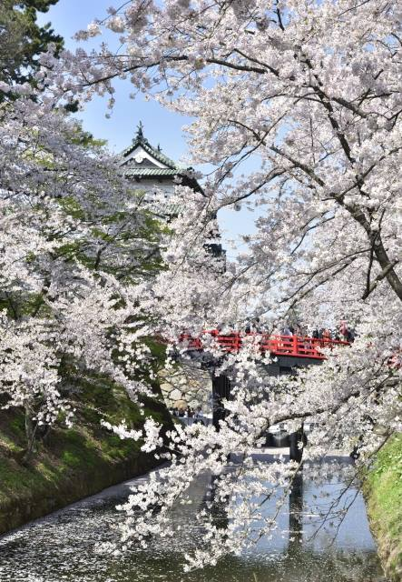 Hirosaki Castle and Sakura photo spot 1.