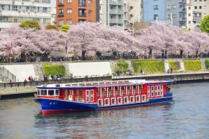 "When you get on a sightseeing boat in ""Sumida gawa"" River, you can enjoy a lot of cherry trees together."