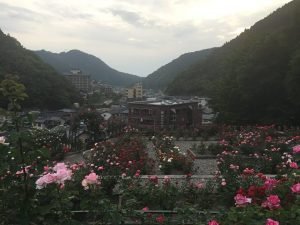 You can enjoy not only roses but also the view of Atsumi Onsen district too.