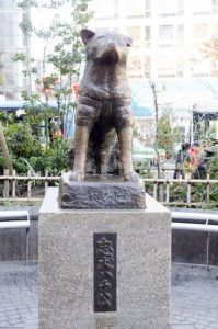 "Akita Dog is model for ""statue of Hachiko"" near the Shibuya station."
